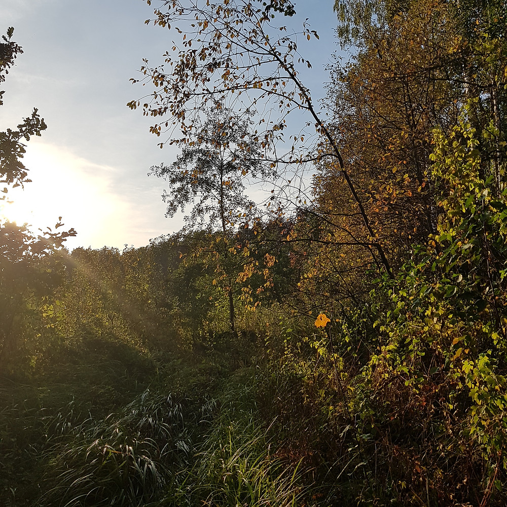 popołudnie w lesie