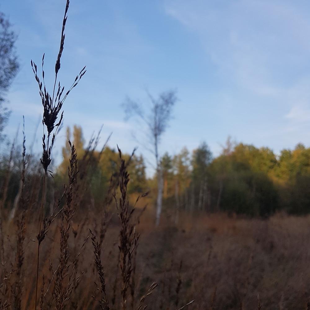 jesienna łąka