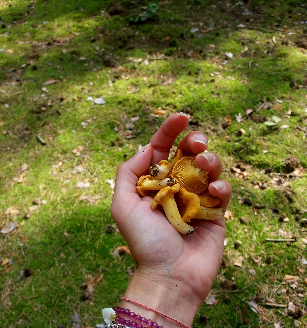 kurki w lesie