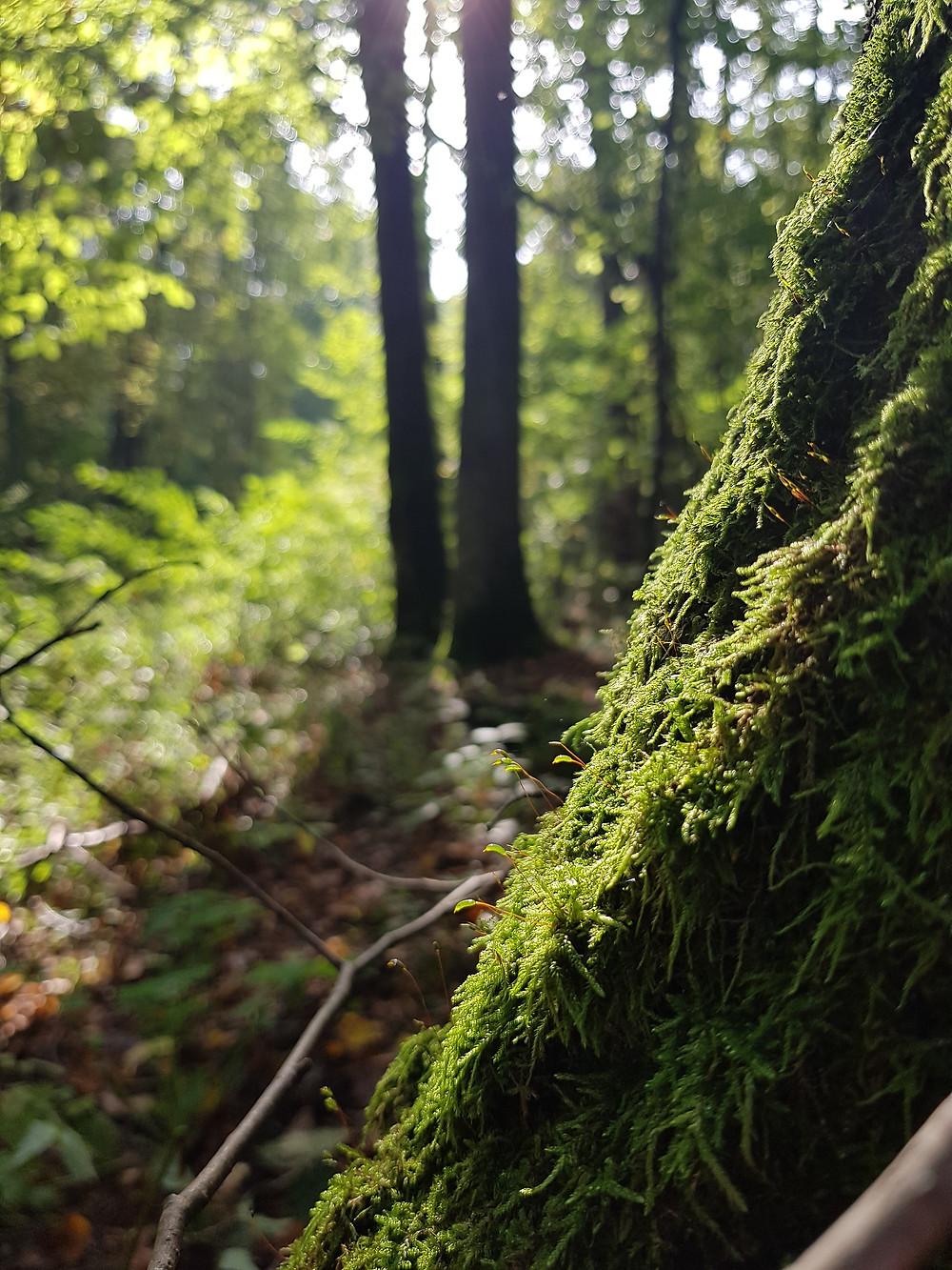 mech na drzewie