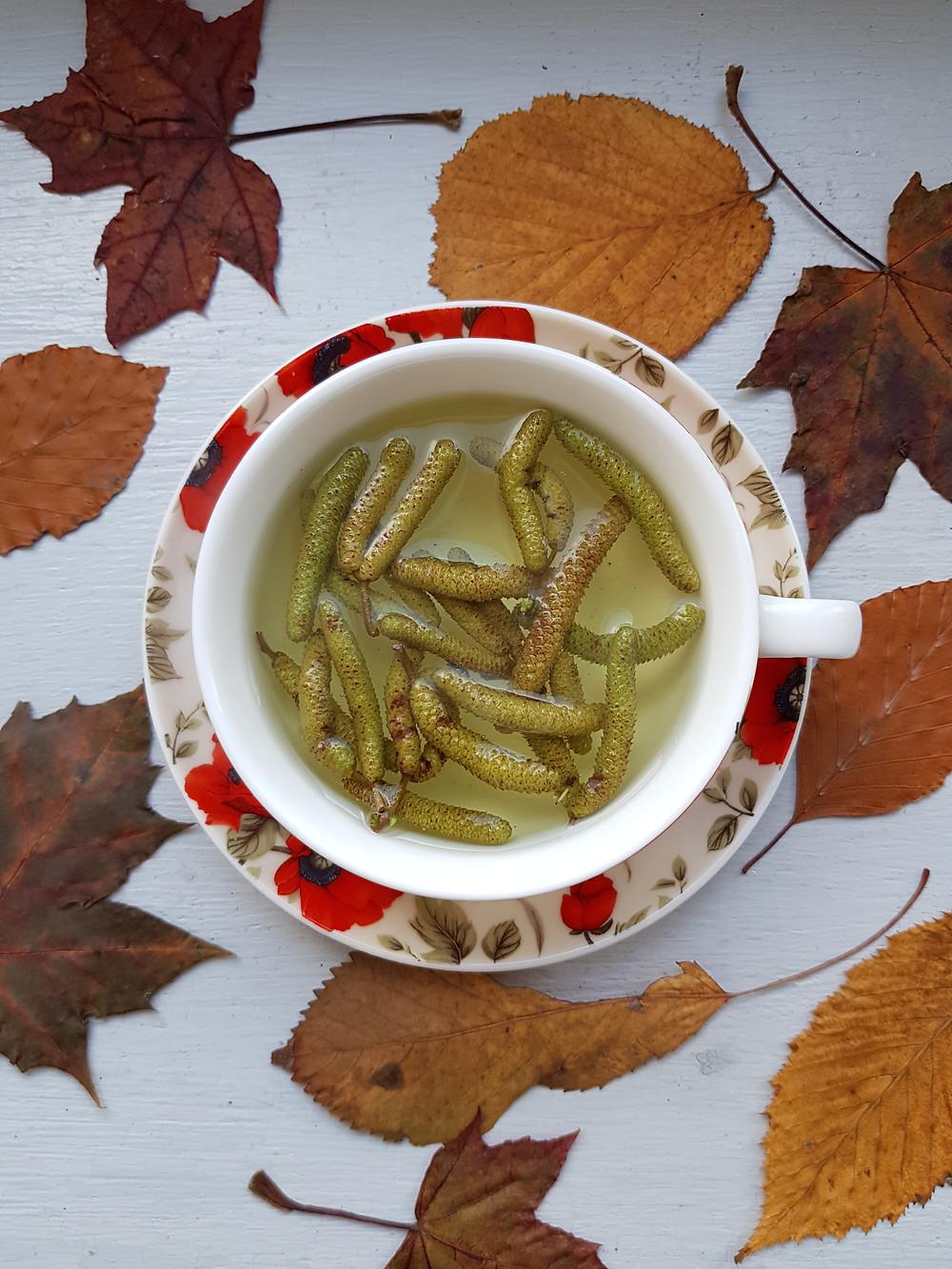 herbatka leszczynowa