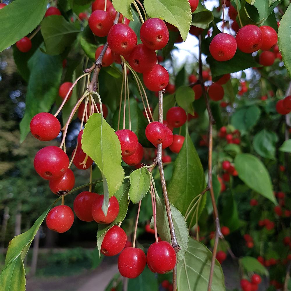 owoce września