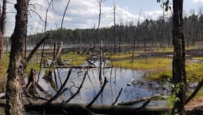 Magiczne Bagna/Magical Swamps