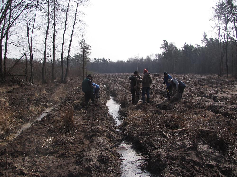 prace na uprawie leśnej