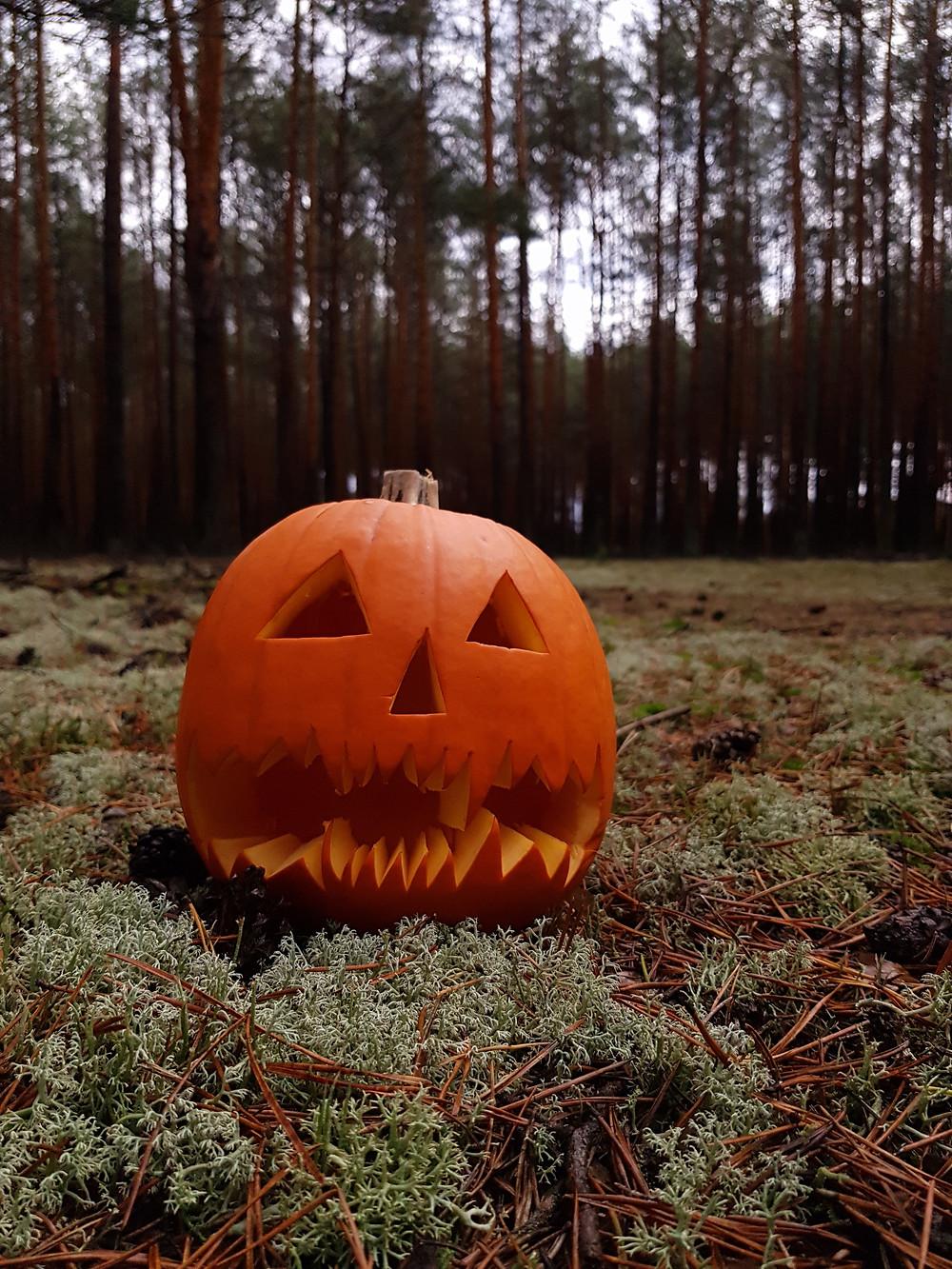 pumpkin in the woods