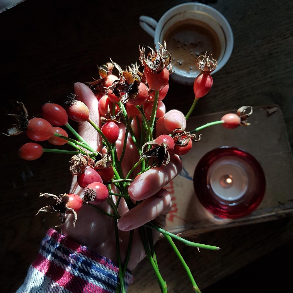 owoce róży