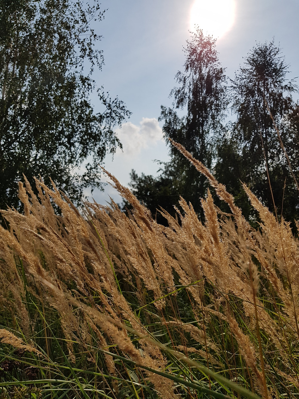 jesienne trawy