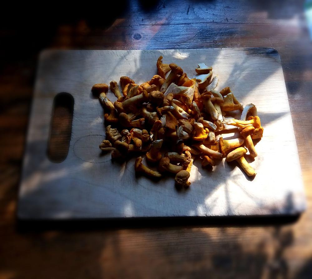 grzyby kurki na desce