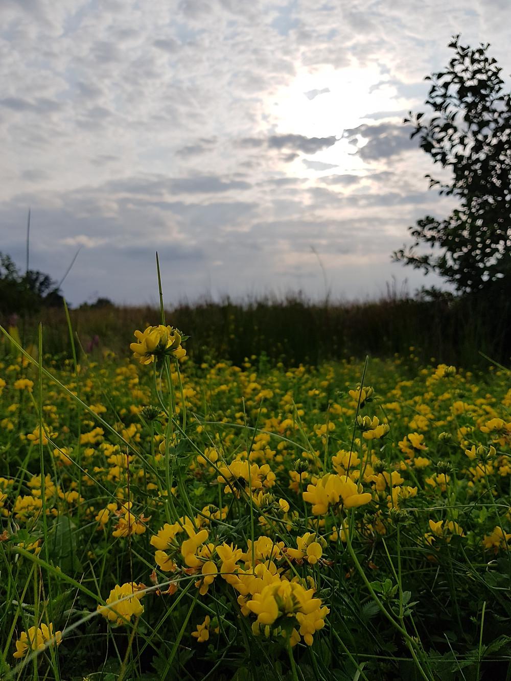 żółty kwiat na łące