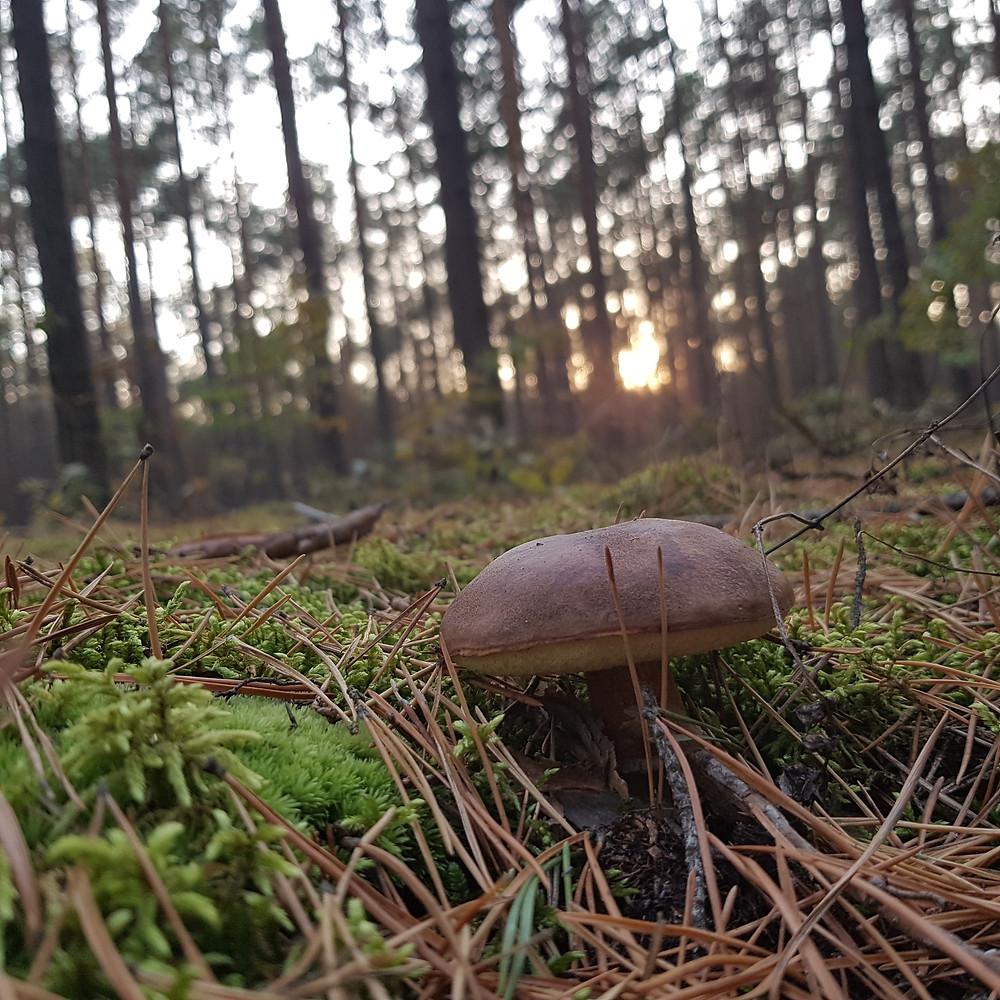 wieczór w lesie