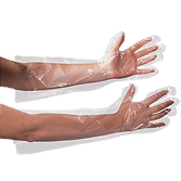 long-poly-food-handling-gloves-1000px_ed