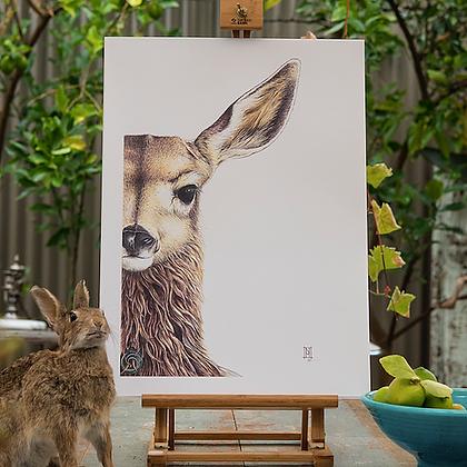 Wild Grey Fox - Various Wildlife Prints