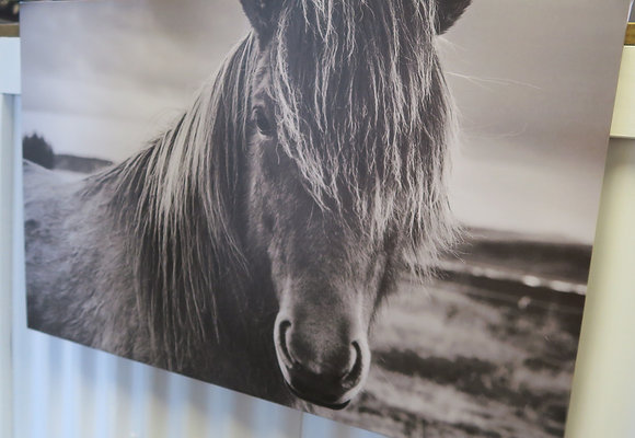 Lone Brumby Canvas