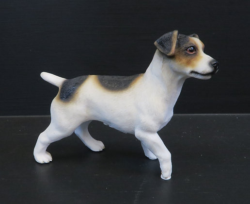 Leonardo - Jack Russell Terrier