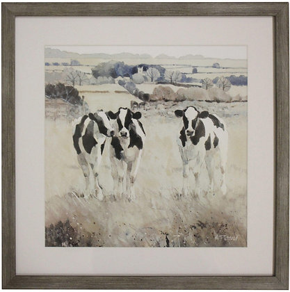 Framed Print Grazing Cows