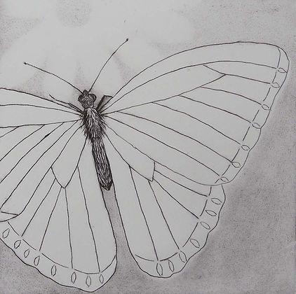 Offset butterfly over ghost flower.jpg