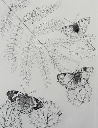Butterflies and nettles.jpg