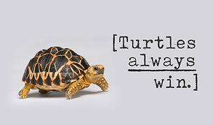 Turtles Graphic.jpg