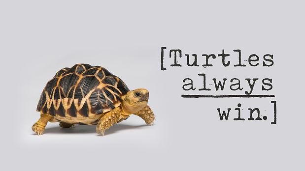 Turtles Graphic.jpg