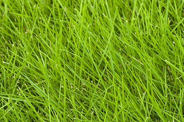 Houseman-Grass-Series-–-All-about-Zoysia