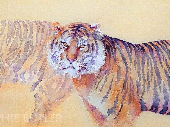 """New Tiger Painting - """"Twilight Prowl"""""""