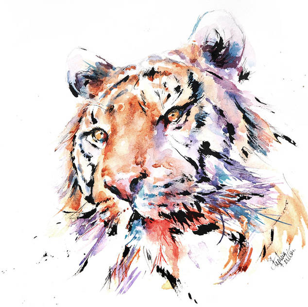 Panthera Tiger