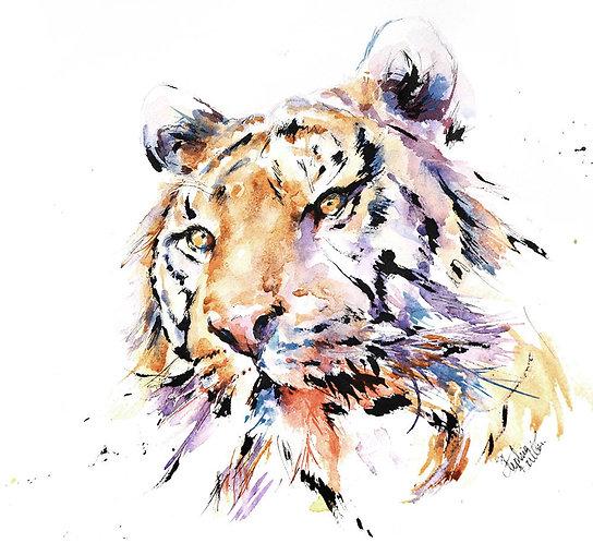 Panthera Tiger IV