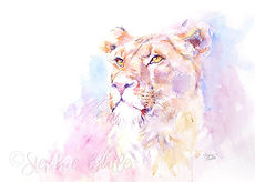 Stephie Butler watercolour lion wildlife painting