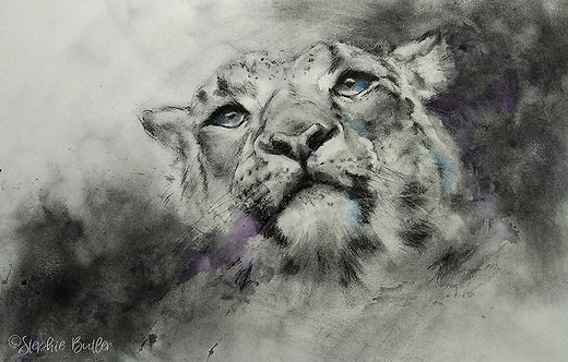 Snow Leopard in charcoal & watercolour