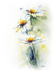Daisy painting watercolour