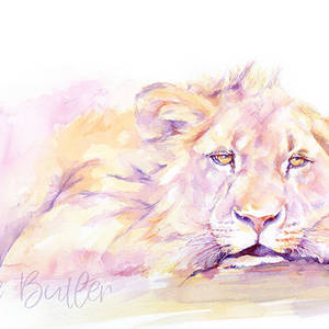 Dozy Lion