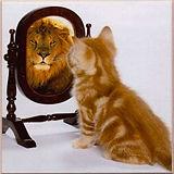 kitty in mirror.jpg