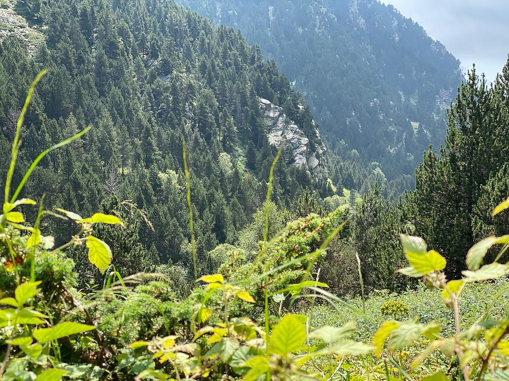 Vegetación típica Vall de Nuria