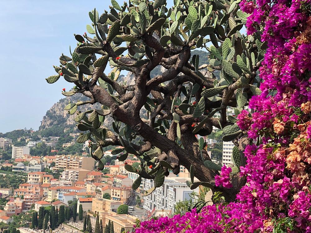 Flores en el jardin exotico Monaco