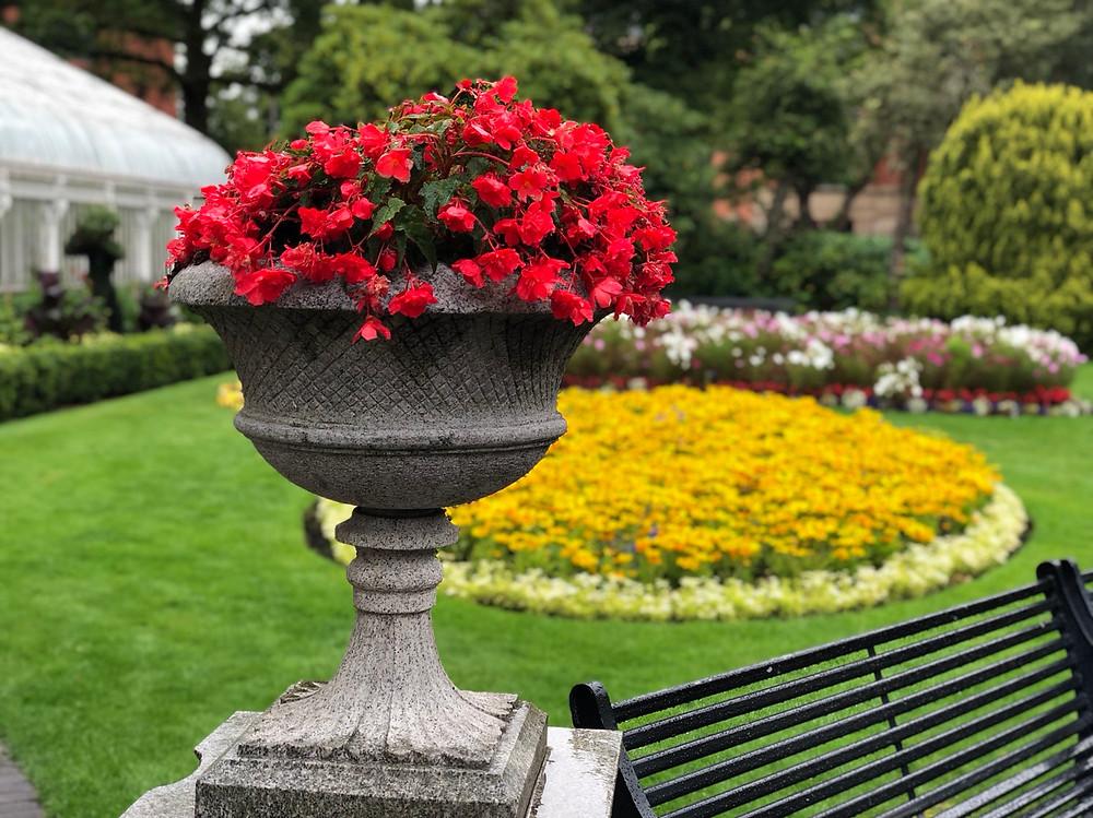 Flores Belfast
