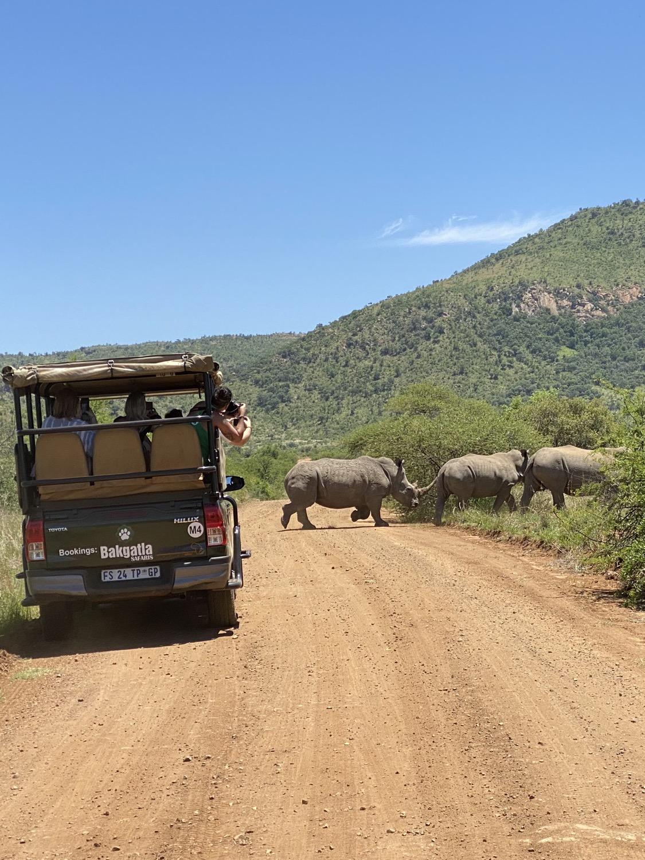 Grupo de rinocerontes en Sudáfrica