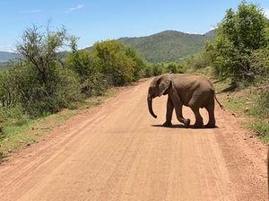 Review Pilanesberg National Park