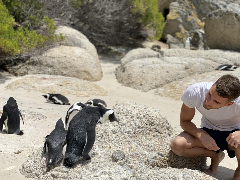 Penguin beach Cape Town