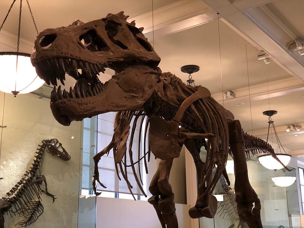 Restos de dinosaurios Nueva York