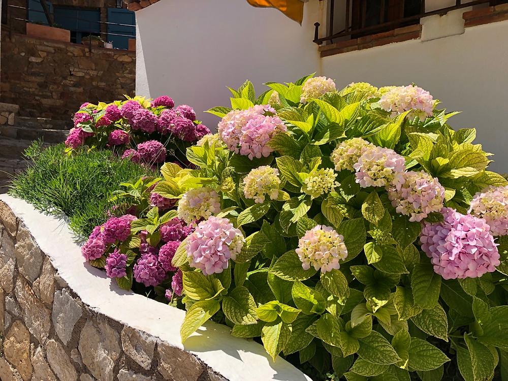 Flores Costa Brava