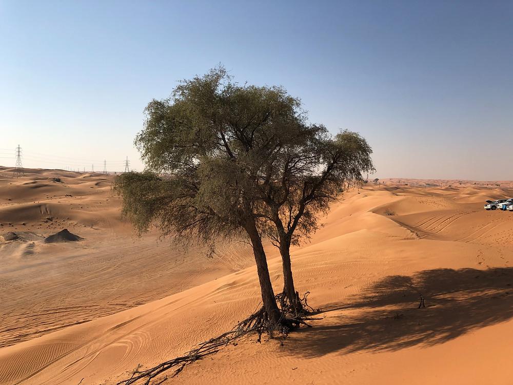 Dos árboles resisten en medio del desierto