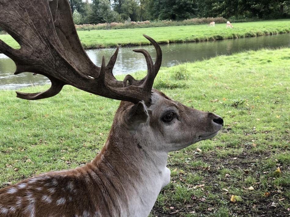 Foto de la impresionante cornamenta de un ciervo macho