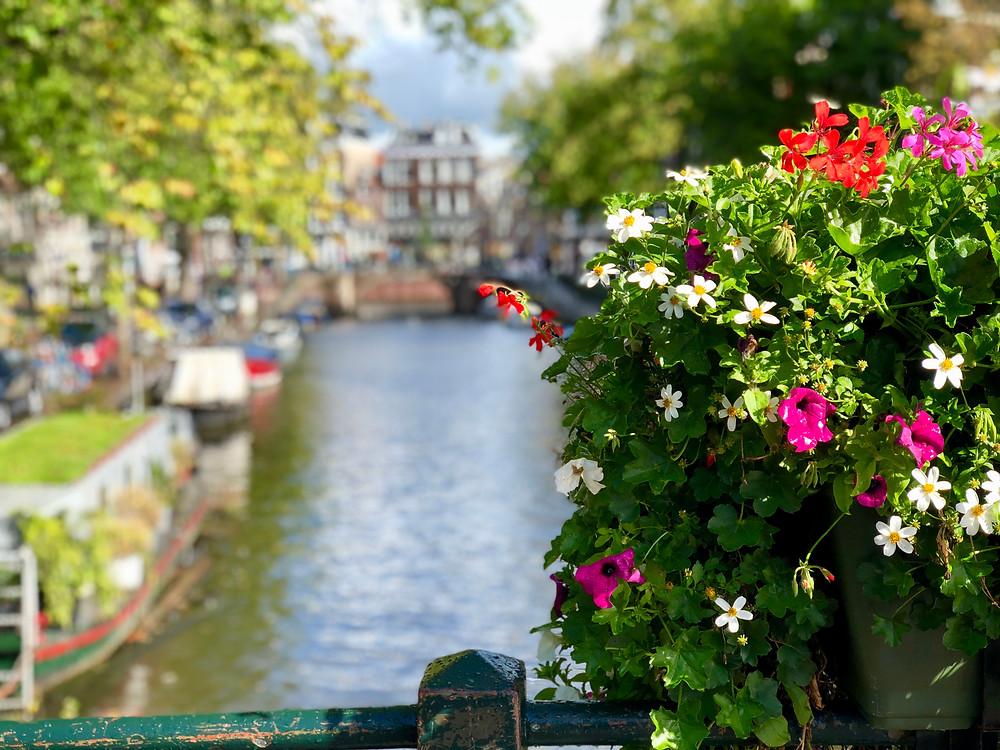 Qué ver y qué hacer en Ámsterdam