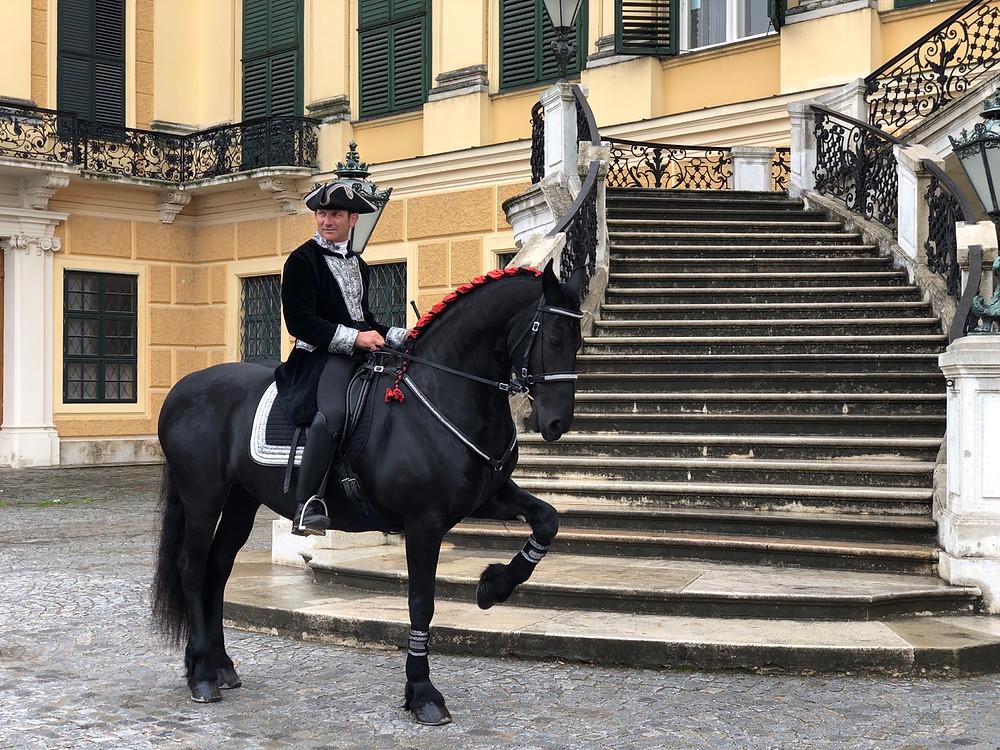 Caballos en Palacio Schonbrunn