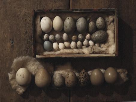 鳥の卵の標本
