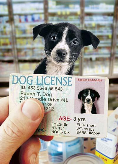 10 Legal, beagle?