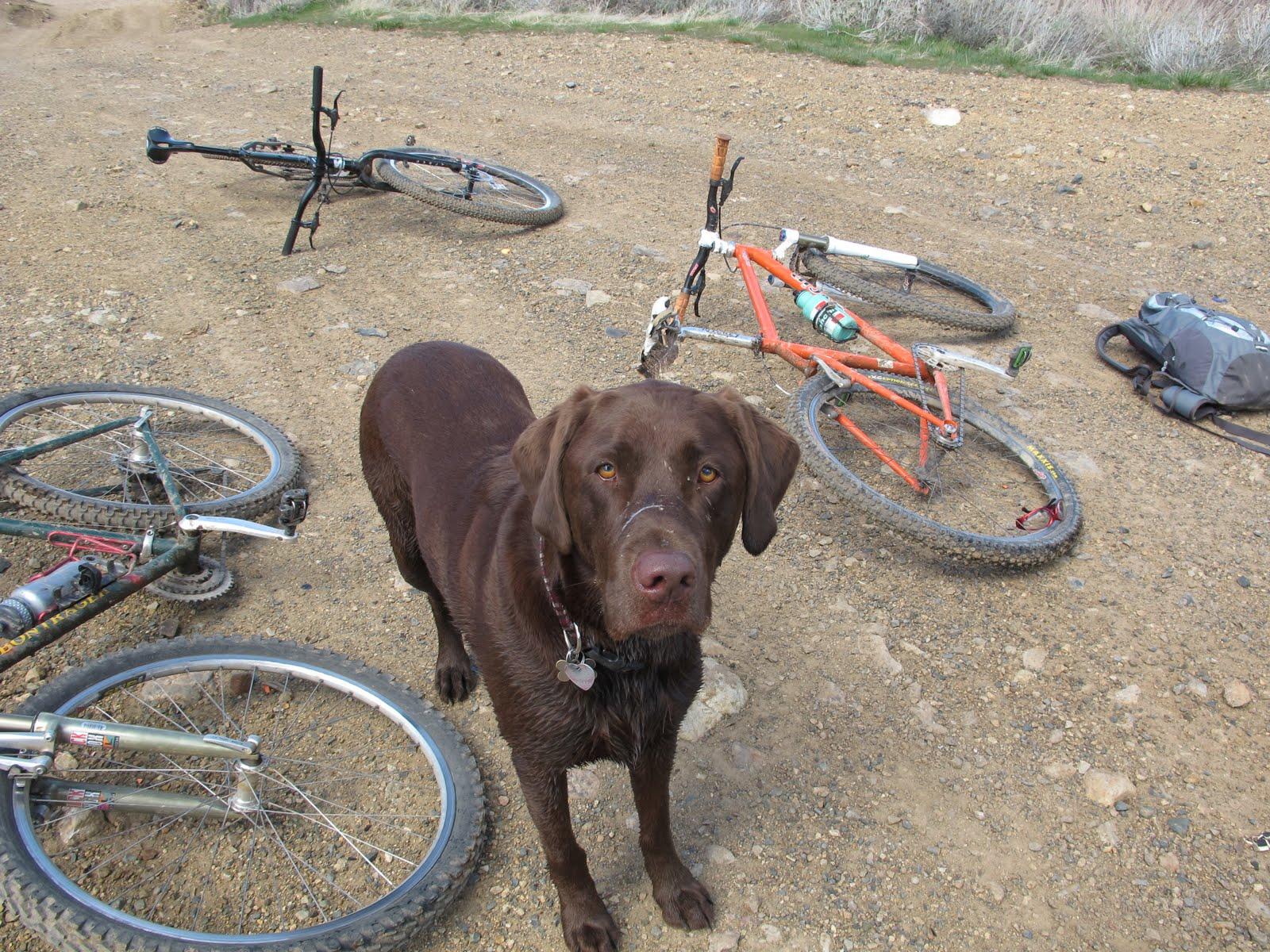 8 No bikes