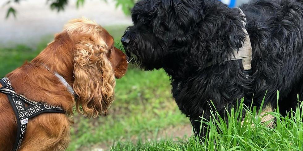 BovisAperitivo: Parola di cane