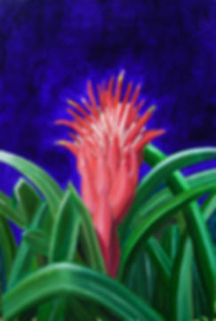 "painting, art gallery, Port Douglas, artisan gallery,paintings online,Oil painting on canvas ""The Adoration'"