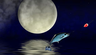 fullmoonfish.jpg